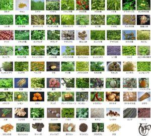 野草原液「酵素八十八選」2